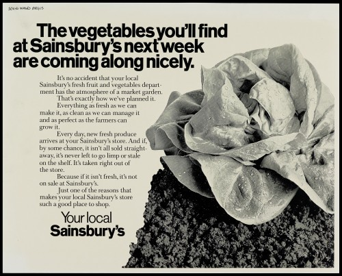 "SA/MARK/ADV/1/1/1/1/2/5/26 - ""The vegetables you'll find at Sainsbury's next week are coming along nicely"" advertisement proof"
