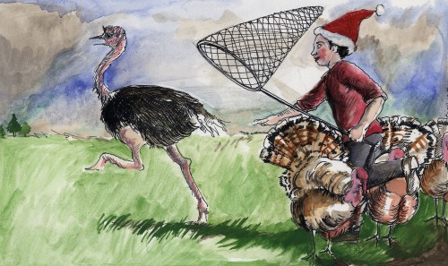 SA/PKC/PRO/1/23/4/1/6 - Illustration of boy with net chasing turkeys, Christmas