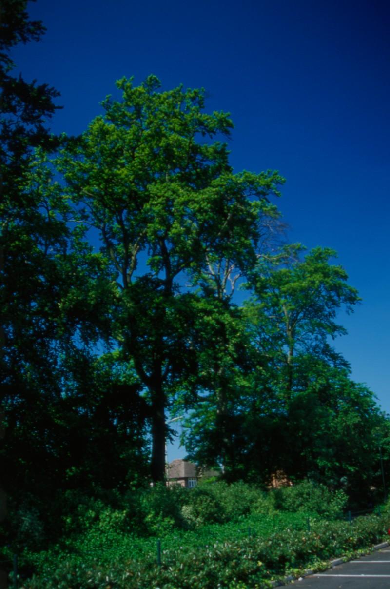 SA/BRA/7/B/46/2/29 - Image of greenery at Oxford Road, Banbury branch