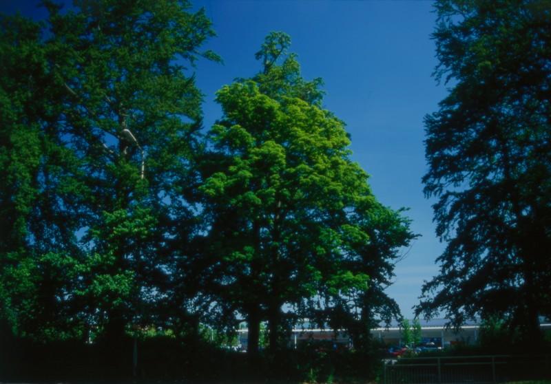 SA/BRA/7/B/46/2/31 - Image of greenery at Oxford Road, Banbury branch