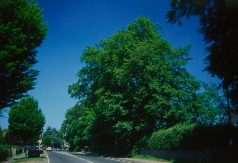 SA/BRA/7/B/46/2/32 - Image of greenery at Oxford Road, Banbury branch
